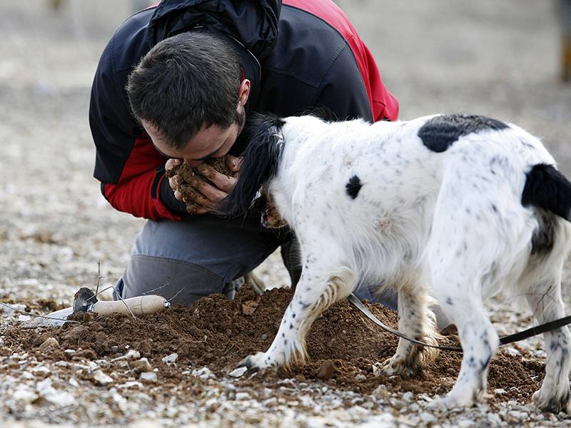 Soria. 20/02/2011. Concurso de caza de trufa con perro en Abejar